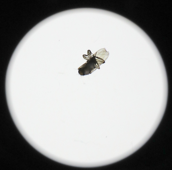 Dead Fly in Lens Barely Affects Image Quality 2