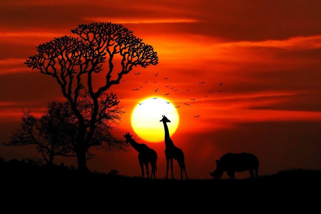 Africa-animals- wildlife-