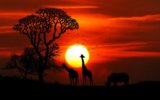 Africa-animals- wildlife-