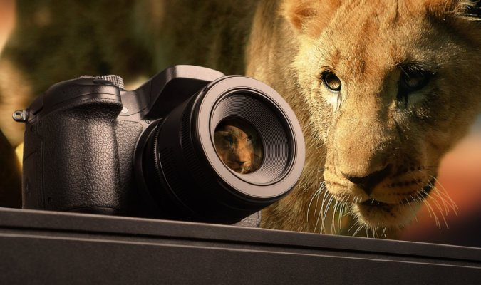 Nikon Lenses for Wildlife Photography Image